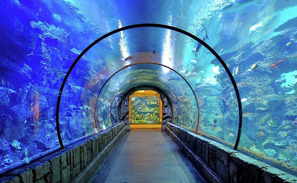 mandalay bay aquarium las vegas attractions for families