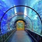 mandalay bay aquarium las vegas attractions for families